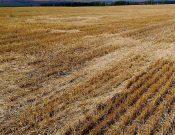 По предписанию Управления Россельхознадзора в Жуковском районе в сельскохозяйственный оборот региона введено 22 га земель