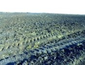 По предписанию Управления Россельхознадзора в Навлинском районе в сельскохозяйственный оборот введены ранее неиспользуемые земли