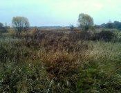 В ходе административного обследования в Брянской области выявлено более 290 гектаров зарастающих земель сельскохозяйственного назначения