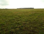 В Вяземском районе Смоленской области в сельскохозяйственный оборот введены земли, ранее зараставшие бурьяном