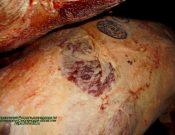 Управление Россельхознадзора отмечает случаи выявления нарушений правил клеймения белорусской говядины, поставляемой в другие страны через территорию России