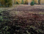 По предписанию Управления Россельхознадзора в Брянской области в сельскохозяйственный оборот введены ранее зараставшие земли
