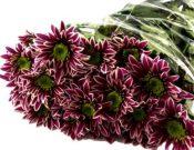 Импортные цветы, зараженные трипсом, уничтожены в Смоленской области