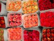 В Смоленской области будут уничтожены 500 кенийских роз, зараженных опасным карантинным вредителем