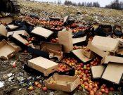 В Брянской области на полигоне ТКО уничтожена подкарантинная продукция неизвестного происхождения, качества и безопасности