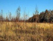 Комментарий специалиста. Введение земель сельхозназначения в оборот в Брянской области