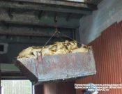 В Брянской области утилизировано более 230 кг нелегально ввезенных сухих сычугов