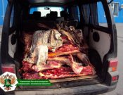 Нелегально ввезенная на территорию Российской Федерации говядина неизвестного происхождения утилизирована в Брянской области