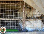 В Брянской области пресечен незаконный ввоз сельскохозяйственной птицы