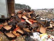 Подкарантинная продукция неизвестного происхождения уничтожена на полигоне твердых коммунальных отходов в Брянской области