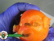 В Брянской области Управлением Россельхознадзора отправителям возвращено около 40 тонн томатов, зараженных опасным карантинным вредителем