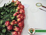 Цветочная продукция проверена специалистами Управления Россельхознадзора