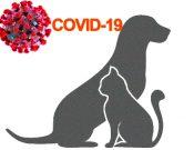 Рекомендации Всемирной организации по охране здоровья животных (МЭБ) касательно коронавирусной инфекции COVID-19 для владельцев домашних животных