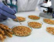 Контроль семян производства местных предприятий