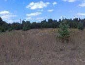 В Брянской области у недобросовестного землепользователя изъята необрабатываемая долгие годы земля