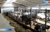 Видео. Смоленские депутаты заслушали отчет аграриев. ГТРК «Смоленск»