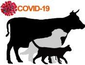 Россельхознадзором выпущены рекомендации по вопросу организации и проведения общих профилактических мероприятий с целью недопущения заноса и распространения коронавирусной инфекции COVID-19 в животноводческих хозяйствах