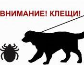 Вниманию владельцев домашних животных! Клещи могут быть переносчиками опасного заболевания — пироплазмоза