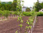 Видео: Рекомендации садоводам. Цикл «Продовольственная безопасность»