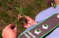 В Брянской области Управлением Россельхознадзора проведена оценка мероприятий по ликвидации карантинного сорняка – амброзии полыннолистной