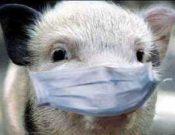 Распространение вируса АЧС  требует ответственного отношения к соблюдению правил по предупреждению заноса данного опасного заболевания на территории Калужской области