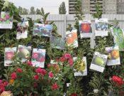 В Калужской области сняты с реализации более 200 саженцев без документов
