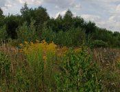 После проверок Россельхознадзора неиспользуемый земельный участок передан в муниципальную собственность
