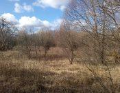 В Калужской области собственник 148 гектаров сельскохозяйственных земель привлечен к административной ответственности