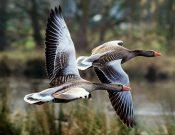 Для недопущения заноса возбудителя гриппа птиц на территорию регионов необходимо усиление профилактических мер