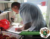 Почти 14 тонн зараженного трипсом перца не прошли фитосанитарный контроль в Брянской области