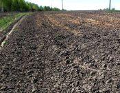 В Навлинском районе по предписанию Управления Россельхознадзора в сельскохозяйственный оборот введены ранее зараставшие земли