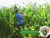 Мониторинг карантинного фитосанитарного состояния Брянской области в 2020 году проведен на площади более 300 тысяч гектаров