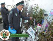 Контроль семян и посадочного материала в местах массовой торговли