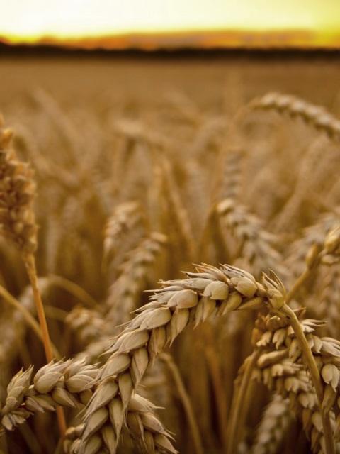 Итоги работы в сфере обеспечения качества и безопасности зерна и продуктов его переработки за 9 месяцев 2021 года