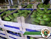В Смоленской области в партии груш, поступивших из Республики Беларусь, выявлена маркировка Польши