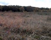 В Почепском районе выявлено 278 гектаров зарастающих земель сельскохозяйственного назначения