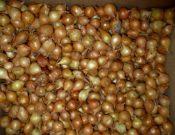 Контроль семян в местах массовой торговли в Смоленской области выявил нарушения