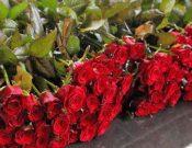 В Калужской области пресечен вывоз роз, зараженных трипсом
