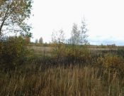 В Брянской области собственникам зарастающих сельхозугодий направлены предостережения о недопустимости нарушения обязательных требований земельного законодательства