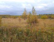 В Смоленской области собственникам заросших сельхозугодий направлены предостережения о недопустимости нарушения обязательных требований земельного законодательства
