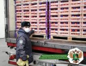 В первом квартале 2021 года Управлением Россельхознадзора пресечен ввоз более 460 тонн импортной растениеводческой продукции, зараженной карантинными вредителями
