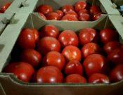 В Смоленской области утилизировано более 79 тонн нелегально ввезенных с территории Республики Беларусь томатов, помело и груш