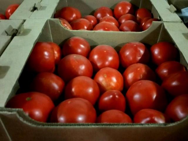 Нелегально ввезенные с территории Республики Беларусь томаты и перец утилизированы на полигоне ТБО в Брянской области