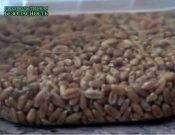 Видео. Цикл «Продовольственная безопасность». Особенности декларирования зерна в 2021 году