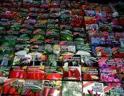 Контроль семян в местах массовой торговли