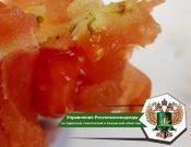 В Турцию возвращены томаты, зараженные молью