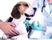 Владельцы домашних животных смогут привить своих питомцев от коронавирусной инфекции