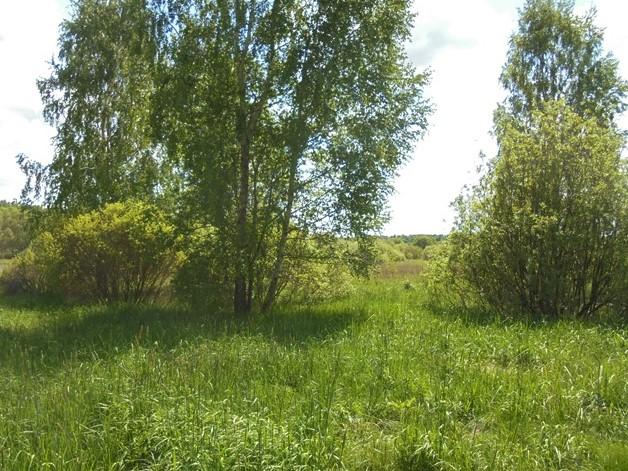 В Брянской области недобросовестной собственнице зарастающего земельного участка сельхозназначения грозит его изъятие в судебном порядке