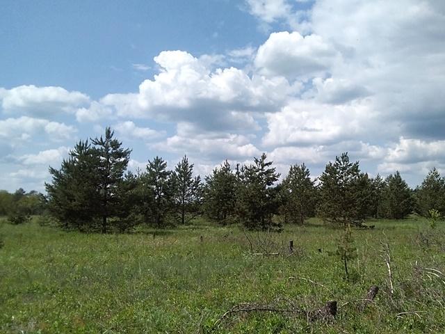 По решению суда администрации Суземского района придется оплатить штраф 100 тыс. рублей за зарастающие земли