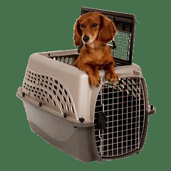 О приостановке вывоза собак в Канаду